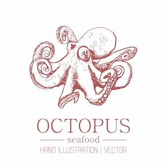 Octopus. vintage style. hand drawing.