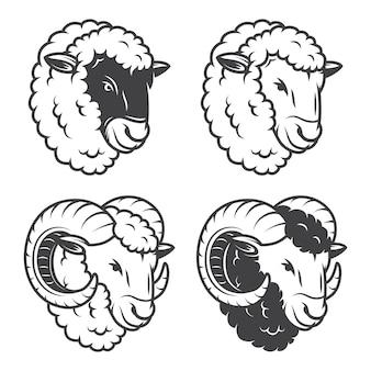 4頭の羊と羊の頭。モノクロ、白い背景で隔離されました。