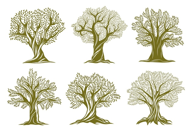 Old olive, willow or oak trees engraved icons. trees with twisted trunk and branches