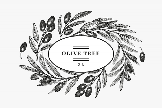 Olive branch design template. hand drawn   food illustration. engraved style mediterranean plant. retro botanical picture.