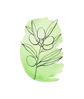 Акварельные иллюстрации оливковой ветви