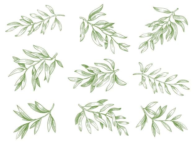 オリーブの枝。緑のギリシャのオリーブの木の枝の葉の装飾的な手描きのベクトルスケッチイラストセット。白で隔離の刻まれた熟した緑の自然と有機植物の小枝