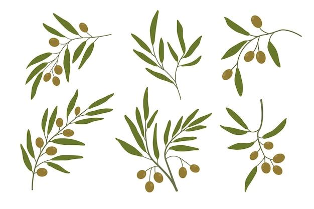 オリーブの枝は2番目のオリーブの木の枝を設定します緑の葉ベクトル図