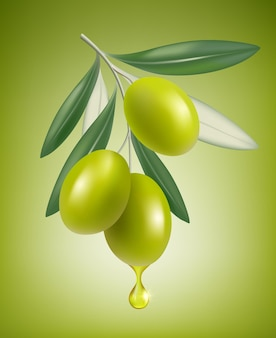 Olive drop. natural branch with splashes of transparent oil  closeup drop  realistic greek olive food.