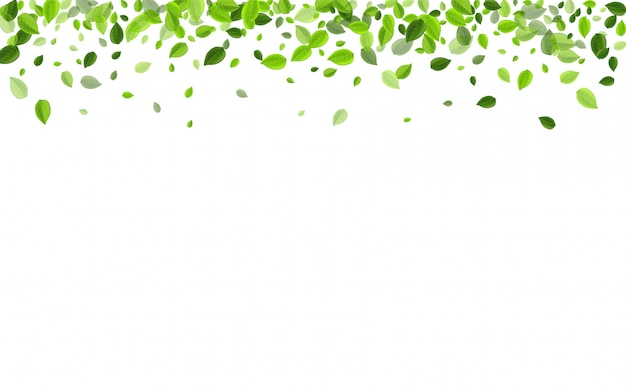 オリーブの葉の森のベクターイラストです。