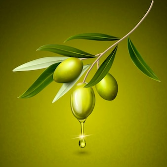 Olive fruits and leaves on a branch isolated green background 3d illustration