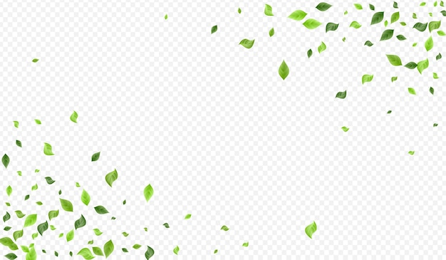 Olive greenery wind transparent background banner