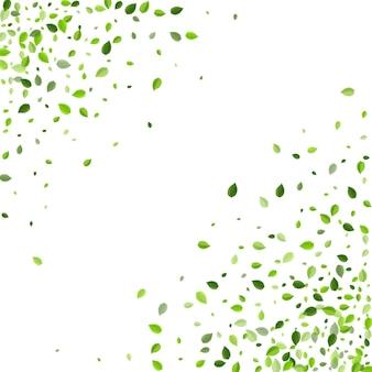 オリーブの葉の木のベクトルパンフレット。葉の枝をぼかす。スワンプグリーンの透明な背景。フライングボーダーを残します。