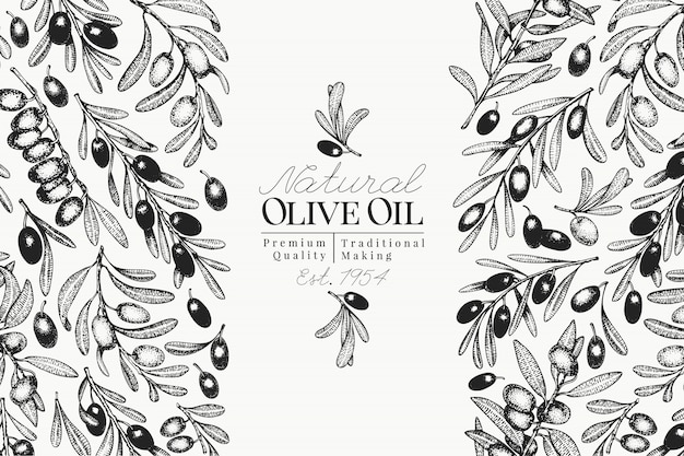 Olive oil label template. vector retro illustration. hand drawn engraved style. design for olive oil, olive packaging, natural cosmetics, health care products. vintage style image.