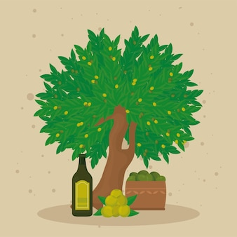 Olive oil tree and products