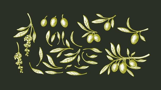 オリーブセット。イラストをスケッチします。手描きの枝、緑の葉、熟した果実、ヴィンテージの花