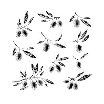 올리브 스케치 요소 컬렉션. 손으로 그린 식물, 잎 프리미엄 벡터
