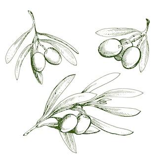 オリーブスケッチ要素コレクション。オリーブの枝は手描きです。白い背景の上のオリーブの枝のスケッチ