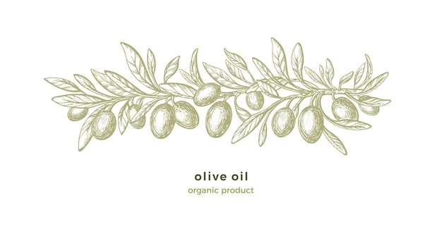 Olive sketch pattern. hand drawn decorations with texture branches, green fruit, vintage leaf