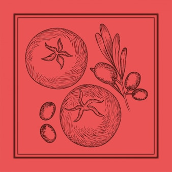 Olive and tomatoes plant drawn italian food
