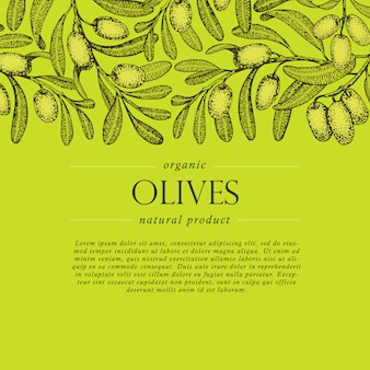 Olive tree branch vector banner. engraving hand drawn style.