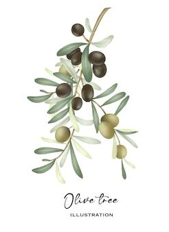 緑と黒の熟したオリーブとオリーブの木の枝は、白い背景の上の孤立したイラストを手描き