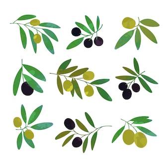 Olive tree branches set of colorful  illustrations