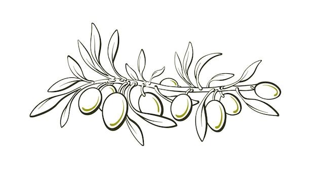 オリーブの木緑の果実の葉自然イラスト簡単なスケッチ