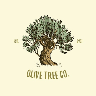 Olive tree logo engraved or hand drawn,  old looking emblem for ecology, camping or food branding