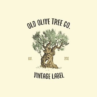 Логотип оливкового дерева, выгравированный или нарисованный от руки, старинная эмблема для экологии, кемпинга или брендинга продуктов питания
