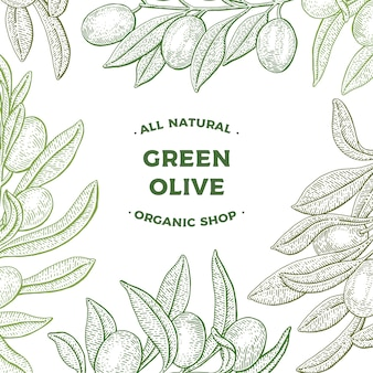 Olive tree. web banner. vintage botany vector hand drawn illustration isolated on white background. sketch style. card.