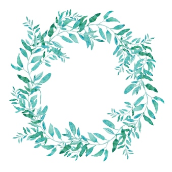Olive wreath isolated on white background. green tea tree leaves.