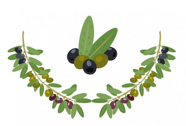 オリーブとオリーブの枝のコレクション。ギリシャオリーブの枝、夏の油糧食品の木の小枝や葉のイラスト