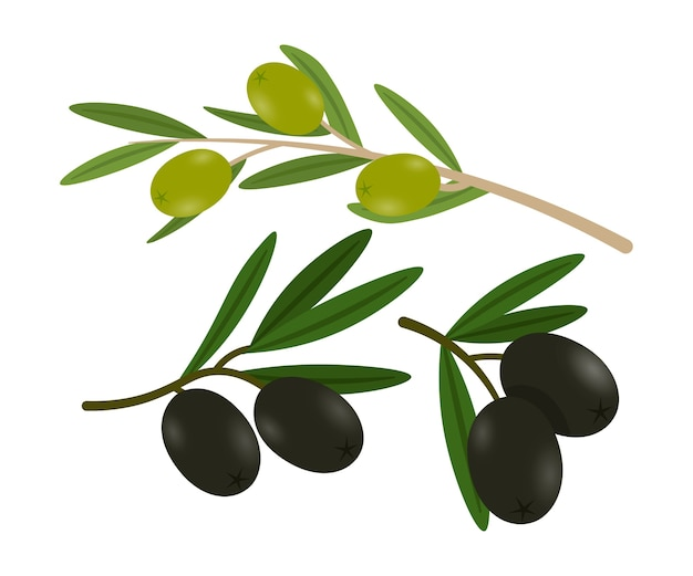 Оливки на набор иллюстраций ветвей