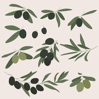 オリーブ。黒と緑のオリーブのセット。ベクトルイラスト。