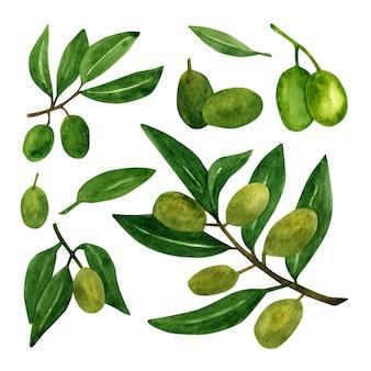이탈리아 요리 디자인 또는 엑스트라 버진 오일을 위한 올리브 가지와 과일이 있는 올리브 세트