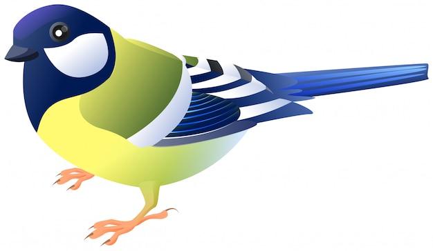 Одна птица большая синица вид сбоку профиль изолирован на белом вектор