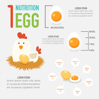 One egg nutrition vector