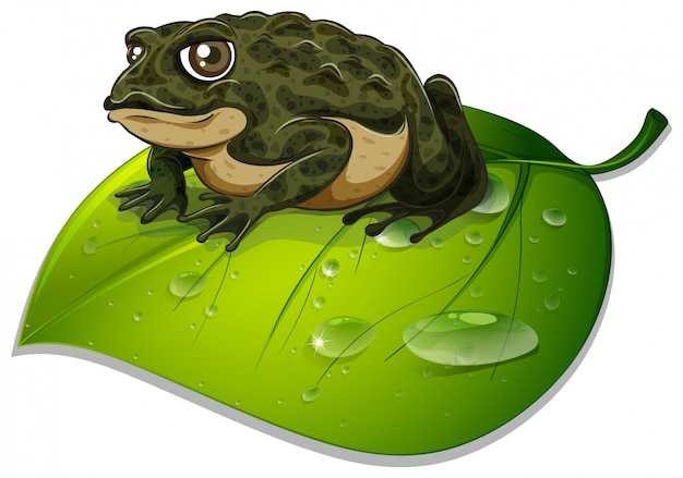 One toad on green leaf on white