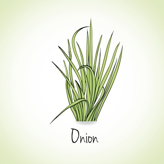 Луковые травы и специи.