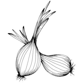 Лук изолированные рисованной иллюстрации. овощной гравированный стиль. эскиз рисунка вегетарианской пищи. продукт фермерского рынка. лучшее для дизайна логотипа, меню, этикетки, значка, штампа.