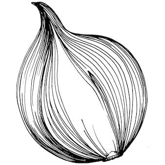 タマネギ孤立手描きイラスト。野菜の刻印スタイル。ベジタリアン料理の絵をスケッチします。農産物市場の製品。