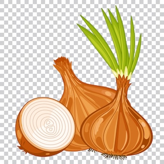 Onion isolated, organic food, farm