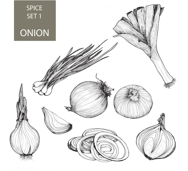 Onion. set of drawings
