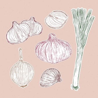 タマネギセット、緑、赤、黄色のタマネギ、手描き野菜イラスト