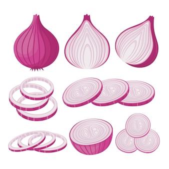 Onion vector set illustration