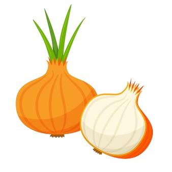 양파 전체와 단면의 절반. 야채, 성분, 식품 포장 디자인 요소, 조리법, 메뉴. 플랫 스타일의 흰색 벡터 일러스트 레이 션에 고립.