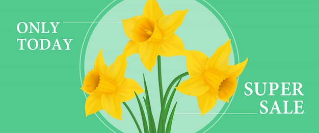Only today super sale banner design with three daffodils in round frame