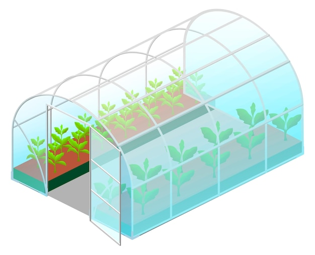 Open greenhouse glass with green plants in isometric view isolated on white