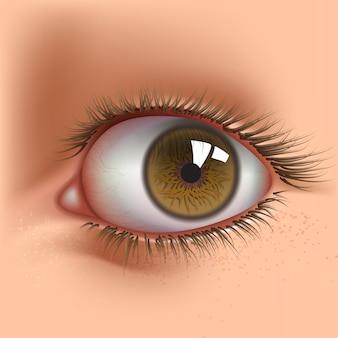 Open human eye close up