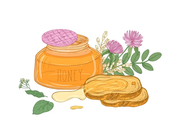Opened glass jar of organic honey, pair of bread slices lying on plate, acacia and linden branches, clover flower isolated on white background.