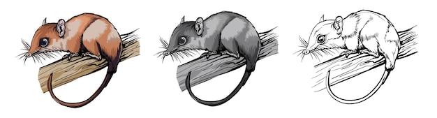 컬러와 흑백의 주머니쥐 동물