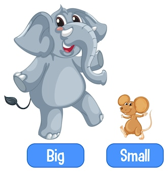 Opposite adjectives words with big and small
