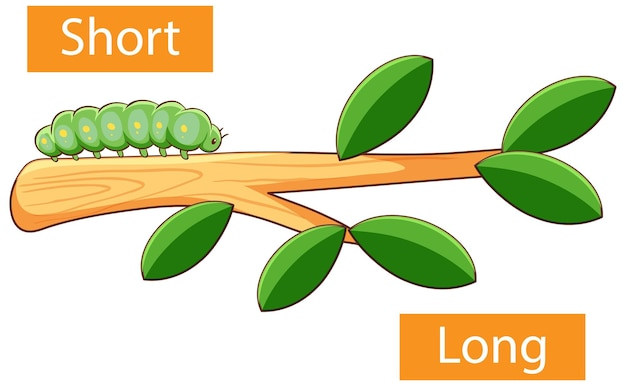 Opposite adjectives words with short and long