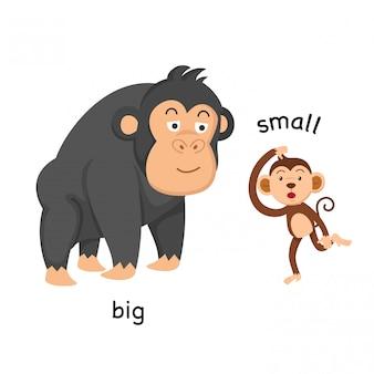 Противоположные большие и маленькие векторные иллюстрации